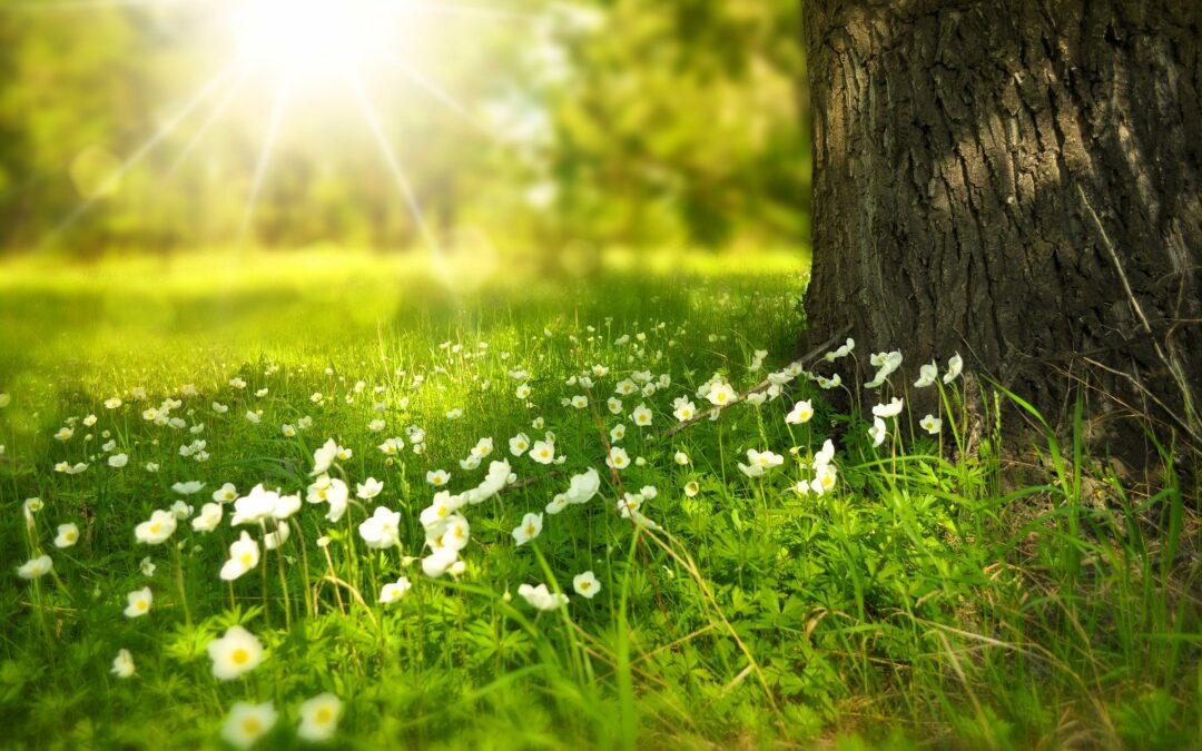 Der Frühling klopft an die Tür…